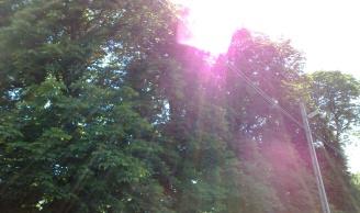 Az árnyékot adó fák